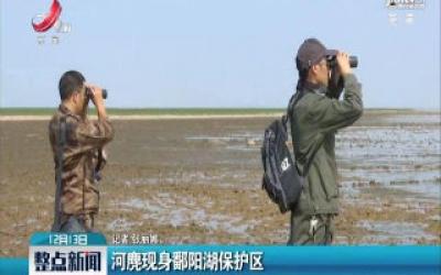 河麂现身鄱阳湖保护区
