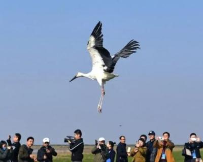 """今年鄱阳湖候鸟大军已经""""集结""""完毕,就问你来不来?"""