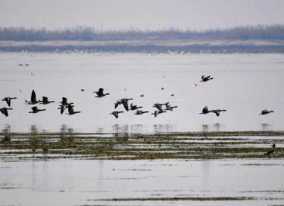 《鄱阳湖湿地和候鸟保护南昌宣言》发布