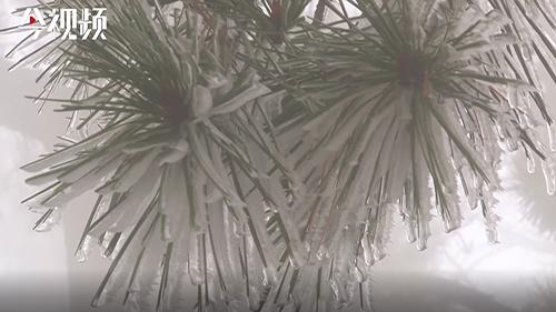 真美!庐山齐现雨凇雾凇景观
