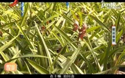 稻花香里20200121
