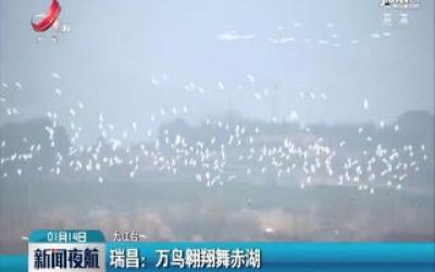 瑞昌:万鸟翱翔舞赤湖