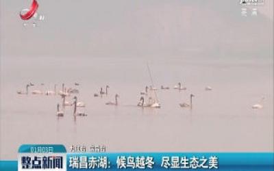 瑞昌赤湖:候鸟越冬 尽显生态之美