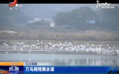 九江瑞昌:万鸟翱翔舞赤湖