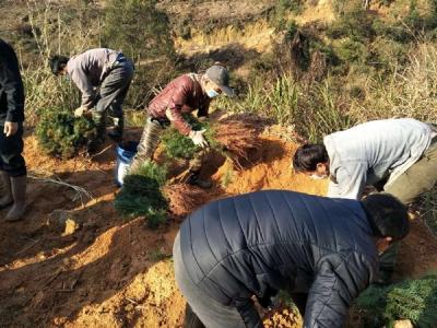 贵溪市西窑林场:防疫造林两不误