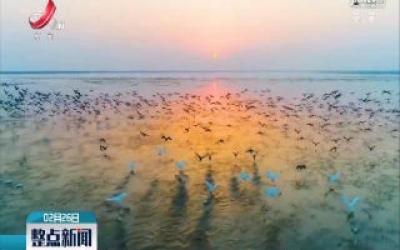 """鄱阳湖余干越冬候鸟吹响北飞""""集结号"""""""