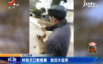 九江瑞昌:村民犬口救黄麂 放归大自然
