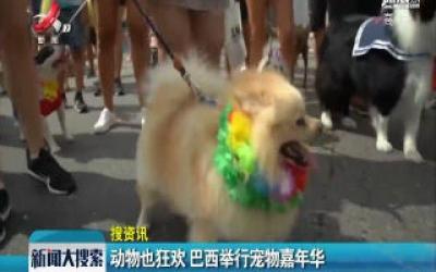 【搜资讯】动物也狂欢 巴西举行宠物嘉年华