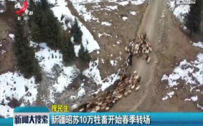 【搜民生】新疆昭苏10万牲畜开始春季专场