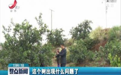 赣州信丰:种脐橙 5G来助力