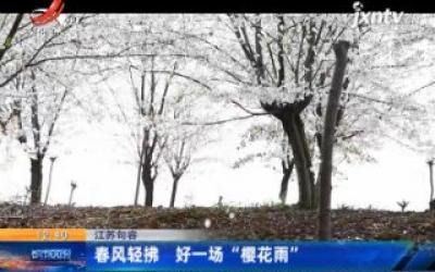 """江苏句容:春风轻拂 好一场""""樱花雨"""""""