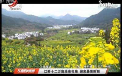 上饶婺源:江岭十二万亩油菜花海 迎来最美时刻