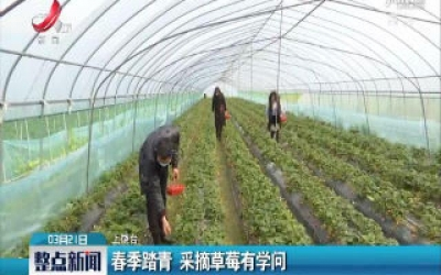 上饶:春季踏青 采摘草莓有学问