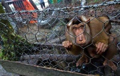 零容忍!江西取缔野生动物非法交易