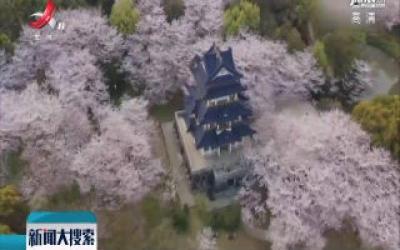 江苏:春风十里鼋头渚 且看樱千树