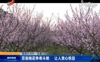 【踏春正当时】宜春:百亩桃花争奇斗艳 让人赏心悦目