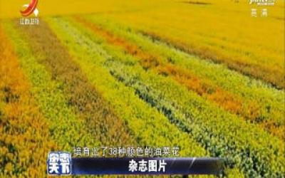 江西农业大学培育38种颜色的油菜花