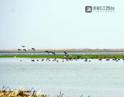保护野生动物资源 疫情防控期间江西检方提起诉讼14件