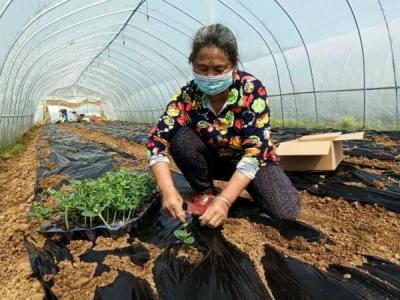 """手把手共同种出""""好日子"""" ——德安县林泉乡做好村集体经济发展与脱贫攻坚结合文章"""