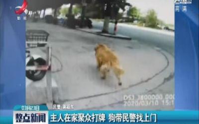 江苏:主人在家聚众打牌 狗带民警找上门