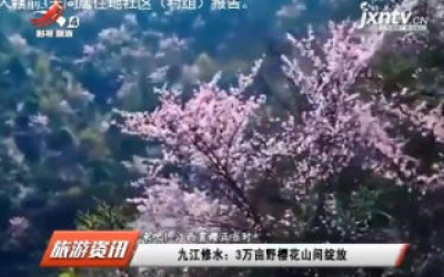 【来吧!江西赏樱正当时】九江修水:3万亩樱花山间绽放