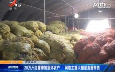 吉安永丰:20万斤红薯滞销急坏农户 网络主播大棚里直播带货