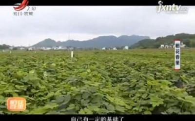 稻花香里20200402
