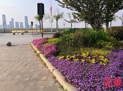 南昌打造一条花卉景观示范路 40万盆鲜花扮靓沿江北大道