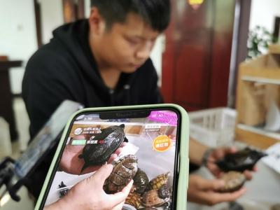 """南丰大学生居家""""直播带货"""" 10天为养殖户网销乌龟13万只"""