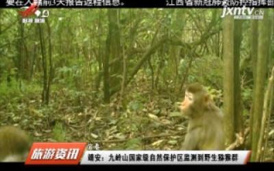 九岭山国家级自然保护区监测到野生猕猴群