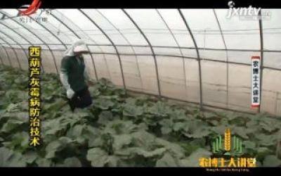 农博士大讲堂20200406 西葫芦灰霉病防治技术