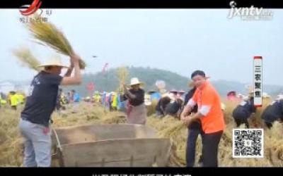 三农聚焦20200406 崛起的稻田