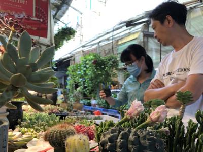 """南昌花鸟市场""""热""""起来 小鱼和多肉植物最受欢迎"""