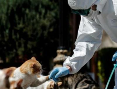 全球新冠死亡病例逾25万 世卫组织强调推动疫苗研发