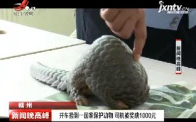 赣州:开车捡到一国家保护动物 司机被奖励1000元