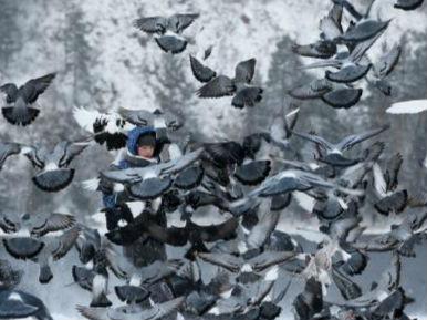 北极圈内最热!俄西伯利亚小镇出现38℃高温