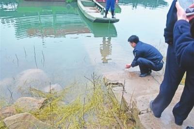 景德镇市救助放生一条国家二级保护动物娃娃鱼