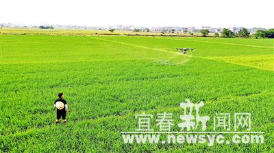 高安:田间管理促丰收