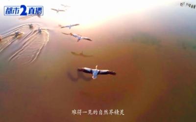 《客来客往 云游江西》2020江西省旅发大会·旅游推介会