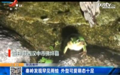 陕西佛坪:秦岭发现罕见雨蛙 外型可爱萌态十足
