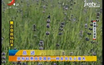 农博士大讲堂20200714 薰衣草栽培技术