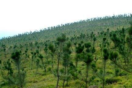 景德镇市造林绿化任务全面完成