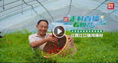 直播:走村直播看脱贫——河埠村用小蔬菜种出致富路