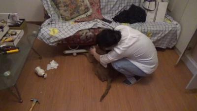 江西南昌:狗头险些不保 消防及时救助