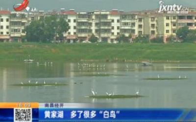 """南昌经开:黄家湖 多了很多""""白鸟"""""""