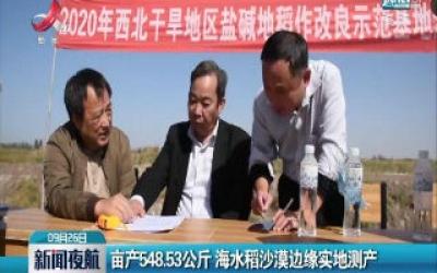 亩产548.53公斤 海水稻沙漠边缘实地测产