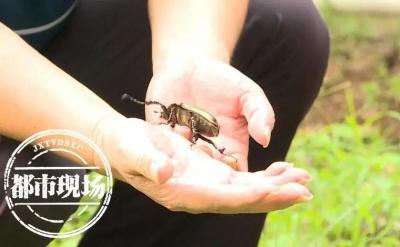 江西一校园内惊现奇特昆虫,它曾被宣布已经灭绝