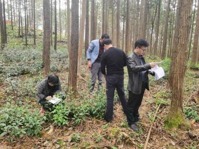 鹰潭贵溪森林药材科技示范基地助力冷水林场林下经济发展