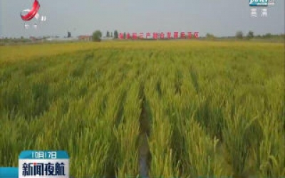 我国10万亩海水稻完成测产结果喜人