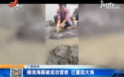 广西钦州:搁浅海豚被成功营救 已重回大海